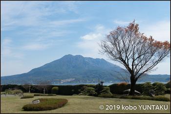 仙厳園から見た桜島