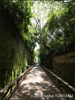 木々に覆われた、木漏れ日の遊歩道