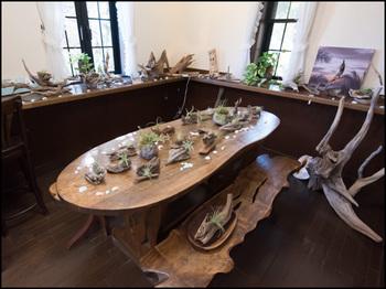 観葉植物と流木&コラボレーションアート展