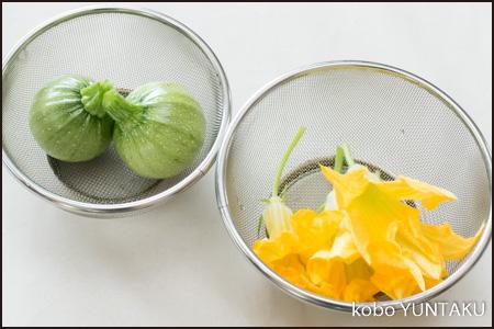 ズッキーニの実と花