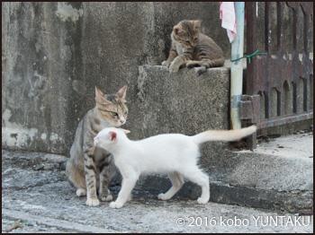 名護市裏通りの親子猫