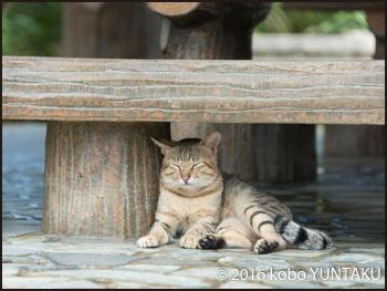 名護城跡で見つけた猫