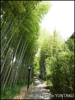 修善寺温泉/竹林の小径